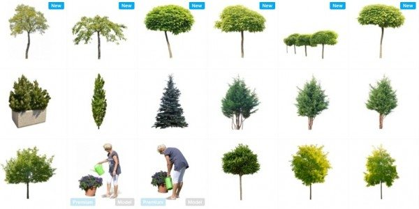 MrCutout.com-Cut-out-tree-png-bushes-flowers-grass-and-other-vegetation-cutouts-for-architects-urba.clipular-e1448853683337